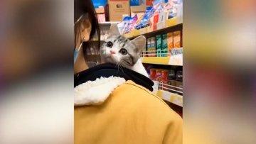 Sahibiyle alışverişe çıkan tatlı kedi