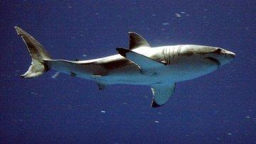 Köpek balığı saldırısından böyle kurtuldu
