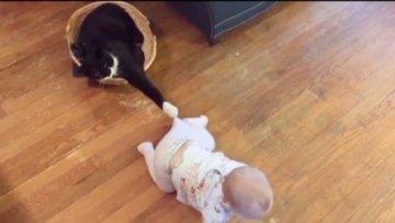 Kedinin bebek ile oyunu izleyenleri gülümsetiyor