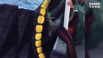 Köpek balığına tekmeli dayağa ceza