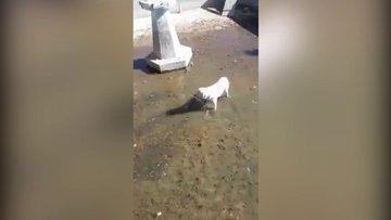 Elazığ'da güldüren köpek kurtarma operasyonu