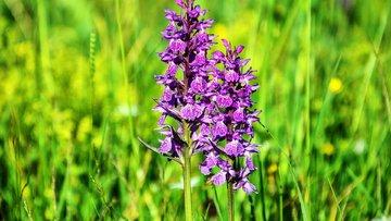 Türkiye, endemik bitkilerden hak ettiği kazancı sağlıyor mu?