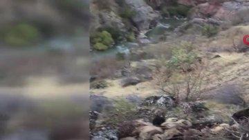 Bitlis´te uçurumdan atlayan 315 koyun öldü