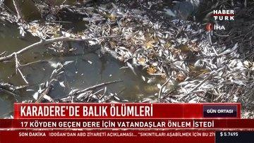 Karadere'de balık ölümleri