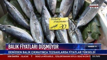 Balık fiyatları arttı!