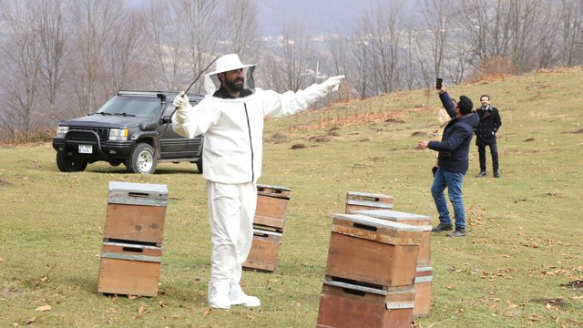 Kuzey arı ve öküz görevlerini tamamlıyor!