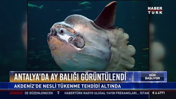 Antalya'da heyecanlandıran görüntü