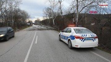Edirne'de şiddetli fırtına ağaç devirdi
