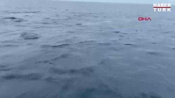 Şişe burunlu yunusların büyüleye balık avı