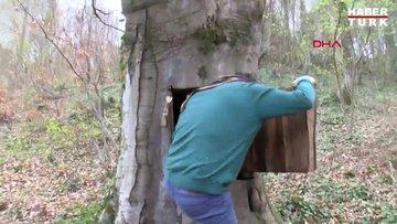 Koronavirüsten korunmak için oyduğu ağaç kovuğuna girmişti,  yasal işlem başlatıldı