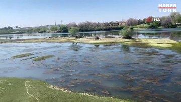 Polisler suları çekilen Fırat Nehrindeki balık ve martıları besledi