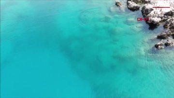Akdeniz foku, Üç Adalar'da görüntülendi