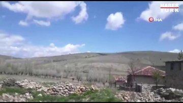 Et yiyen örümcek olarak bilinen 'Sarıkız' vatandaşları tedirgin etti