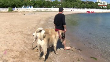 Kadıköy'de çoban köpeklerinin sahil keyfi