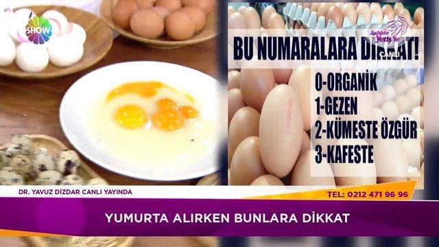 Yumurtalardaki numaralar ne anlama geliyor?