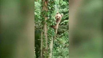 Orman personeline durup durup poz veren sevimli ayı