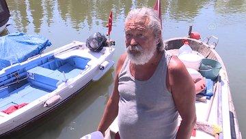 Küçükçekmece Gölü'nde binlerce ölü balık kıyıya vurdu