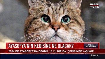 Ayasofya'nın kedisine ne olacak?