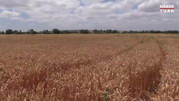 """Yerli ve milli tohum """"Hüseyinbey"""" çiftçilerin yeni alternatifi olacak"""