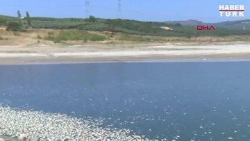 Bursa'daki Hasköy Göleti'nde ölen binlerce balık, kıyıya vurdu