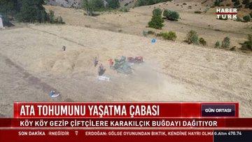 Anadolu'nun 1000 yıllık tohumu
