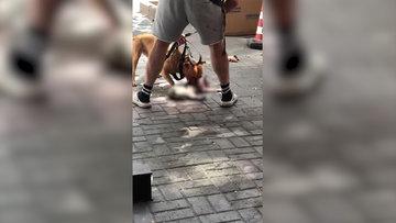 Beşiktaş'ta pitbull cinsi köpek kediyi parçaladı, sahibi müdahale edemedi