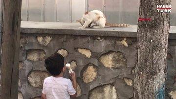 Çınar, kediye dondurmasından yedirdi