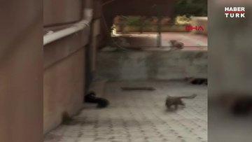 Fare kovaladı, kediler kaçtı