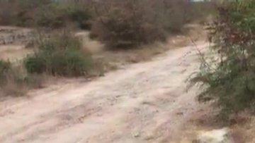 Çuval içinde ölüme terkedilen köpeği jandarma kurtardı