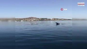 Yunus balıklarından muhteşem şov
