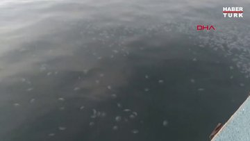 Tekirdağ'da denizanası istilası