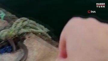 Su samurunu 'gel pisi pisi' diye çağırarak elleriyle besledi