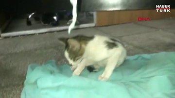 Acil servise giren kedinin kırık bacağı alçıya alındı