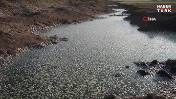 Batman'da korkutan görüntü: Baraj suları çekildi, binlerce balık telef oldu