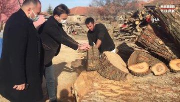 Türk bayrağı figürlü kayısı ağacı bilimsel incelemeye alındı