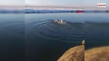 Çaya düşen yavru köpeği kurtarmak için buz gibi suya girdi
