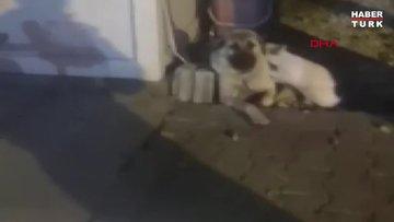 Kedi ile köpeğin yakınlığı ilgi çekiyor