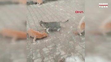 Yıllardır besledikleri 15 sokak kedisinin zehirlenerek öldürüldüğü iddiası