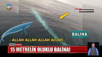 Adana'da dev balina şaşkınlığı!