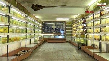 İstanbul'da gizli kalmış 'balık müzesi'
