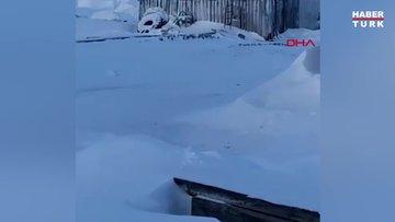 Rusya'da kutup ayısı, evin çatısına çıktı