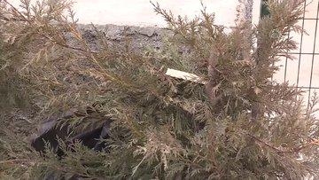Kırıkkale'de bir parktaki 30 ağaç kimliği belirsiz kişilerce kesildi