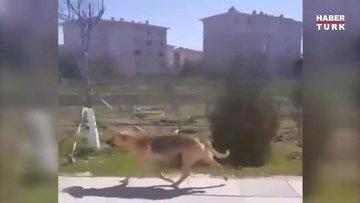 Yavrularına mama kabı taşıyan köpek yürekleri ısıttı