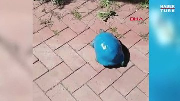 Kaplumbağayı maviye boyadılar