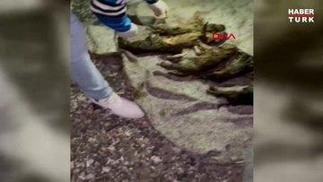 Ankara'da foseptik çukurunda bulunan 6 yavru köpek tedaviye alındı