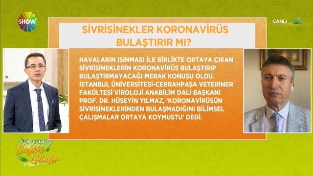 Sivrisinekler ve evcil hayvanlar koronavirüs bulaştırabilir mi?