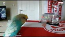 Bu kuş Sivasspor aşığı