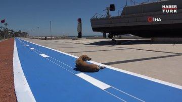Mersin sahili sokak hayvanlarına kaldı