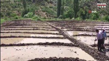 Bayram gününde zorlu çeltik ekimi