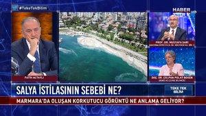 Teke Tek Bilim - 23 Mayıs 2021 (Deniz salyaları neden Marmara Denizi'ne akın etti?)
